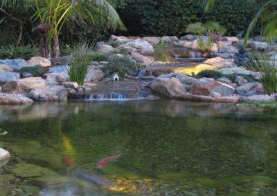 Koi Pond Installers 11
