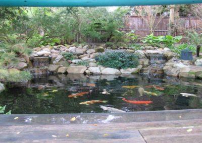 Koi Pond Installers 7